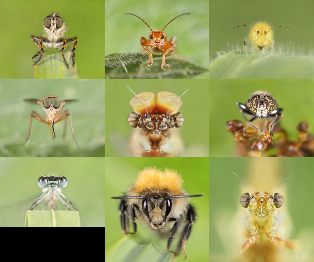Font View Of Insects